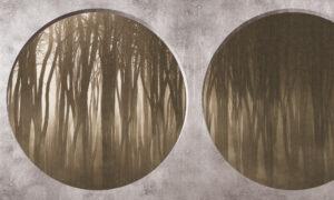 https://www.skinwall.it/wp-content/uploads/2021/09/134C-Shadow-forest-1024x614.jpg